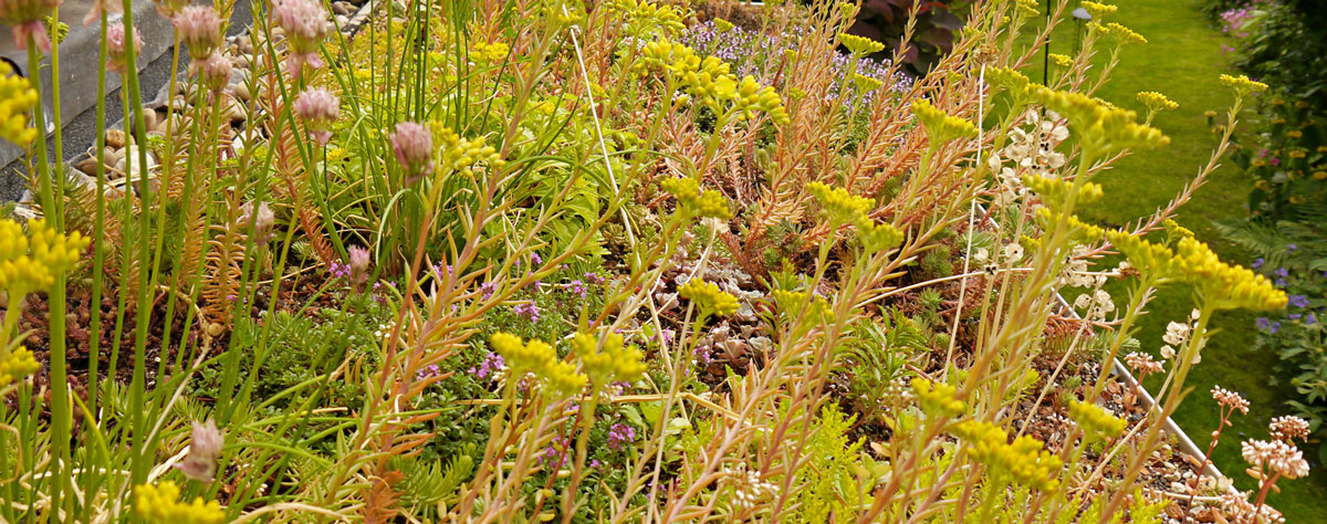 detail photo of summer planting on green roof
